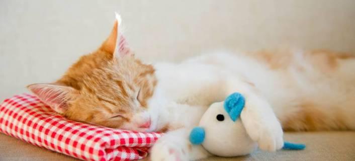 Katzenspielzeug ideen für ein glückliches katzenleben