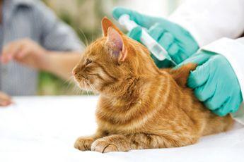 Was Kostet Eine Katzenimpfung